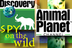 Animal Planet's 'Spy on the Wild'