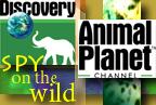Animal Planet's 'Spy on the Wild'